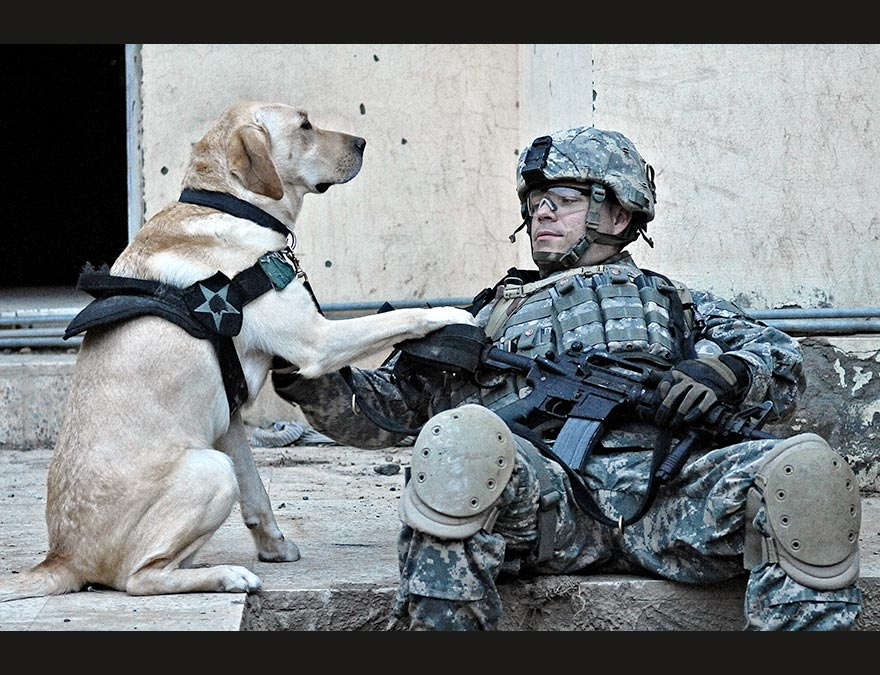 Young soldier in battle fatigues and his dog