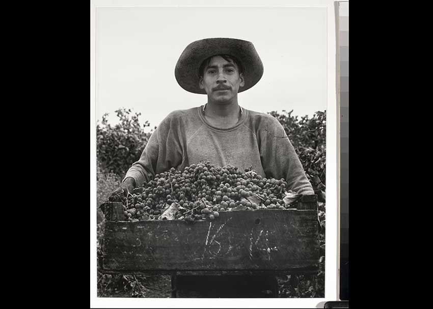 Black and white photo of a grape picker wearing a hat